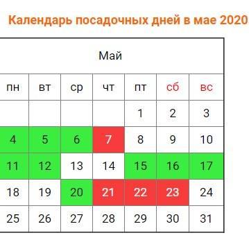 Сроки и правила посадки рассады огурцов в открытый грунт весной 2020 года