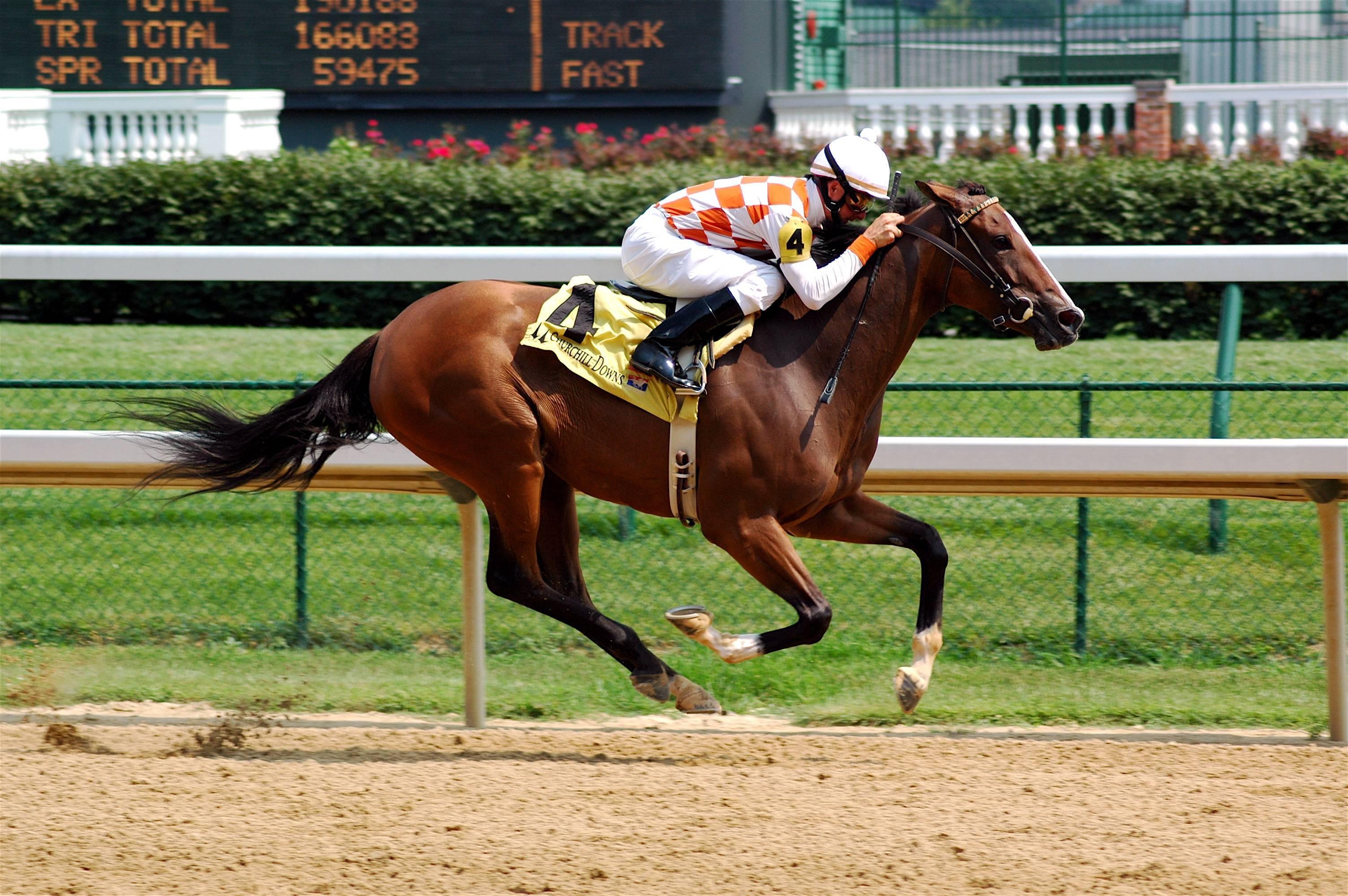 Порода лошадей – владимирский тяжеловоз: особенности, уход, содержание и разведение