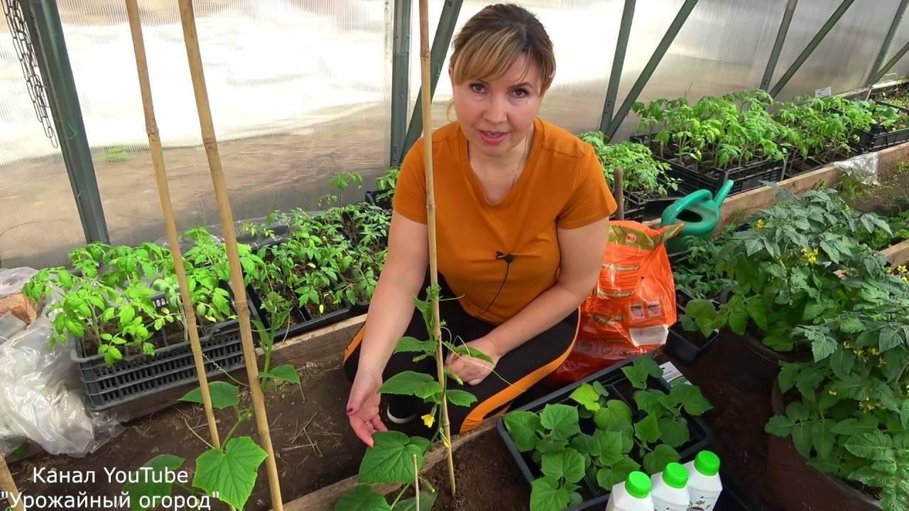 Как применять биогумус: преимущества удобрения
