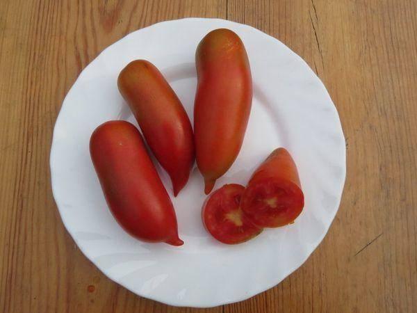 Сорт без хлопот — описание томата «мишель» f1