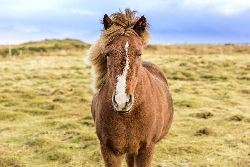 Как размножаются лошади: особенности процесса, сроки гона и беременности