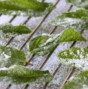 Топ 10 рецептов приготовления заготовок мяты и мелиссы на зиму