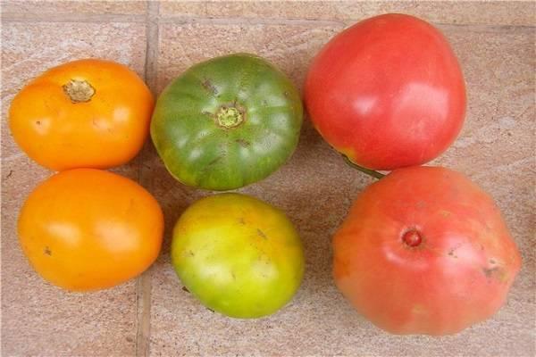 Томат клондайк: характеристика и описание сорта, фото и отзывы об урожайности