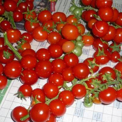 Описание сорта томата флорида петит и его характеристики