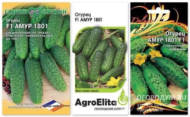 Огурец криспина — особенности и правила выращивания универсального гибрида