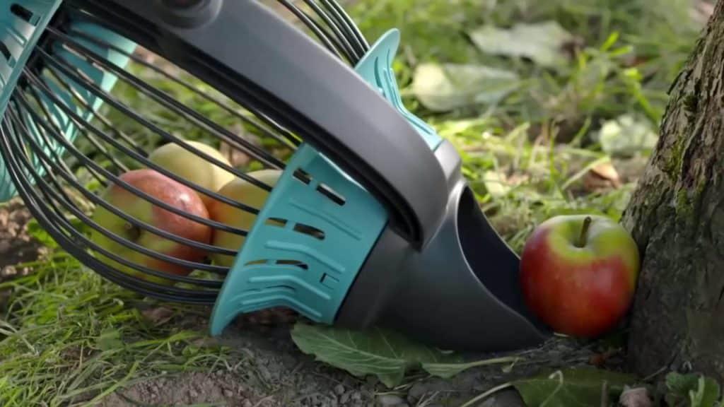 Правила сбора яблок — руками и с помощью специальных устройств