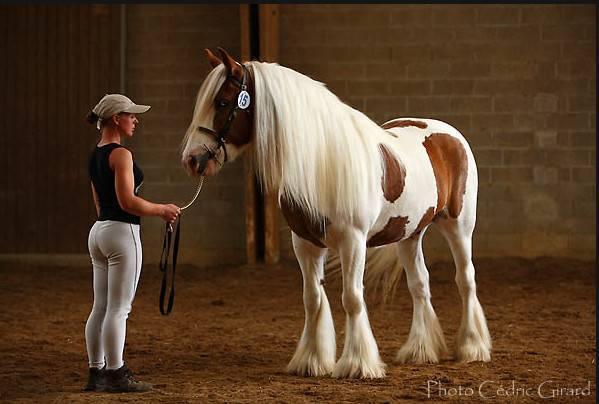 Описание породы чистокровных верховых лошадей и особенности содержания скакунов
