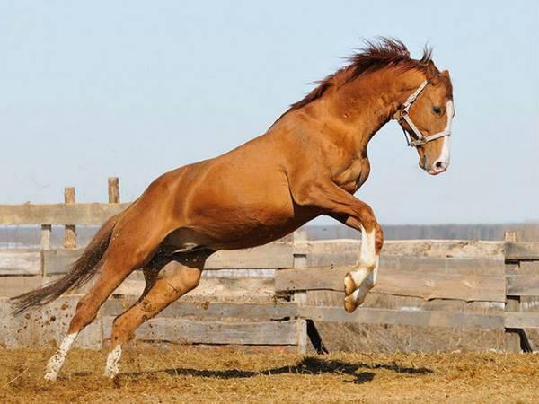 Разнообразие видов и пород лошадей