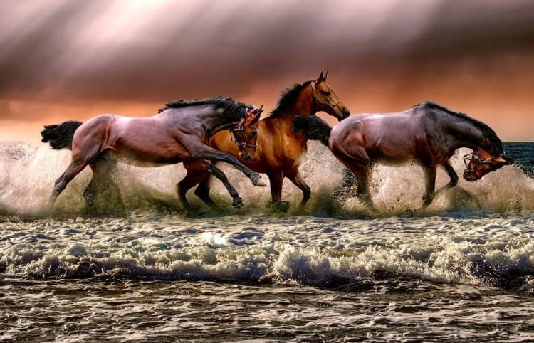 Сколько может проскакать лошадь без остановки