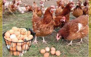 Как увеличить яйценоскость кур несушек зимой?