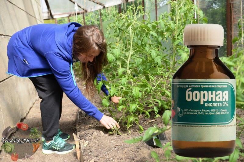 Борная кислота для огурцов: увеличиваем урожай в разы