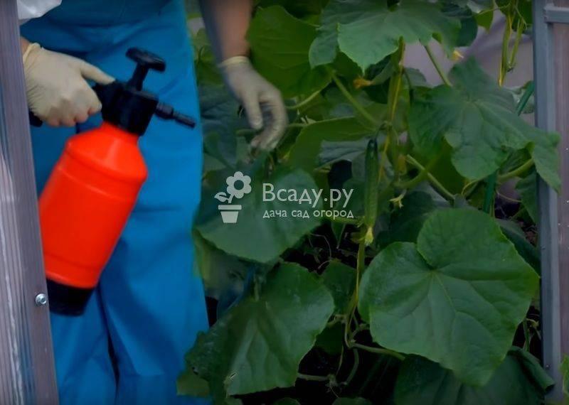 Как и для чего проводить опрыскивание томатов сывороткой с йодом: рецепт раствора и инструкция по обработке