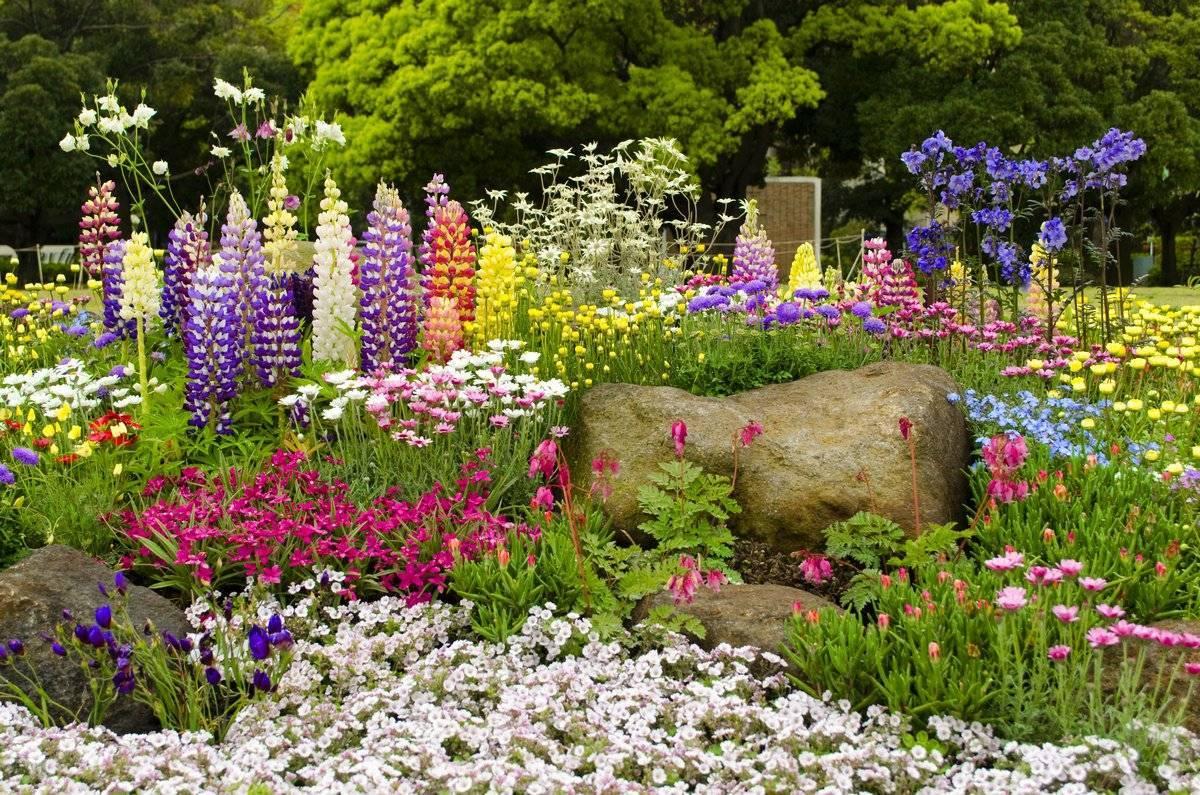 Что посеять на рассаду: список бордюрных цветов