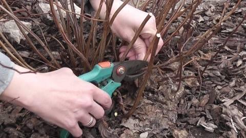 Когда и как обрезать кустарники осенью и весной?
