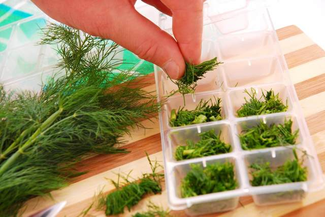 Каким способом заготовить укроп на зиму и не только? как сохранить его аромат и зеленый цвет?