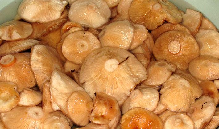 Маринованные волнушки: рецепт с фото для легкого приготовления
