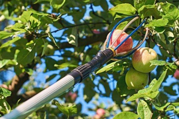 Расчет параметров пресса для яблок, сборка своими руками пошагово