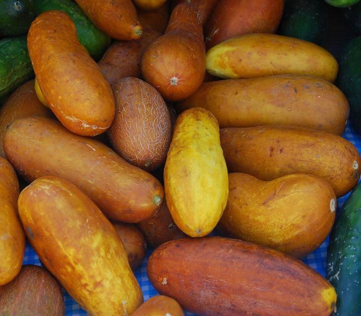 Чтобы урожай был на зависть: какие семена огурцов выбрать —свои или покупные?