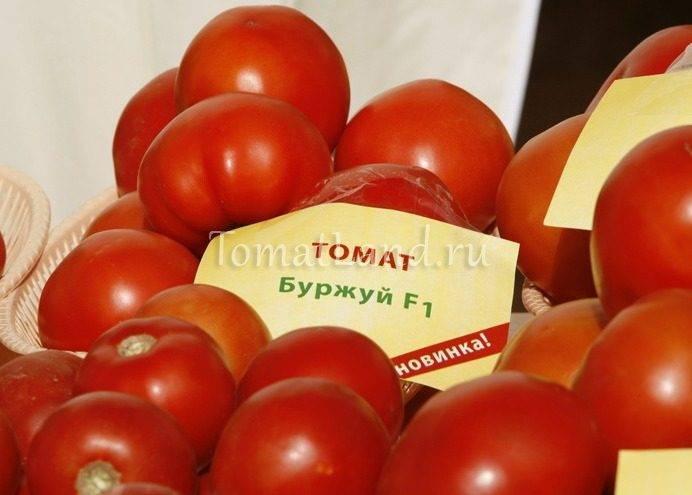 Характеристика и описание сорта томата Примадонна, его урожайность
