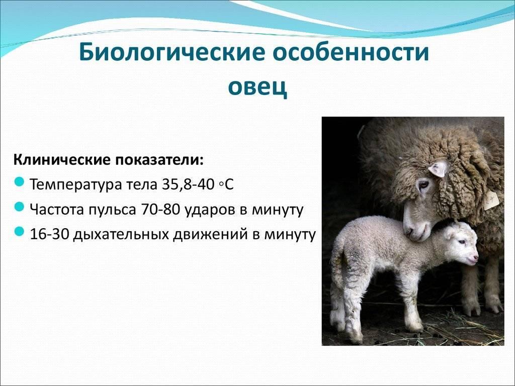 Учет побочной продукции в животноводстве