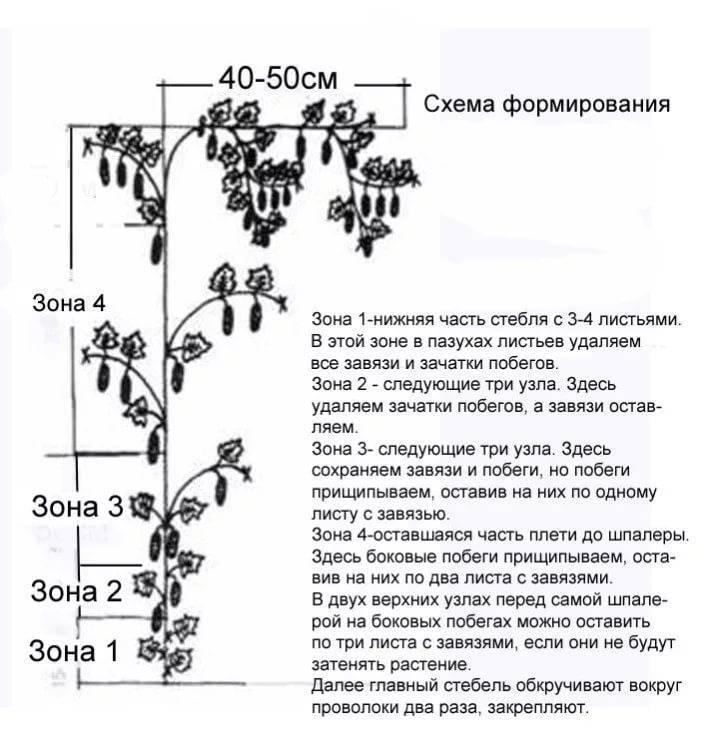 Белые пятна на листьях огурцов: профилактика и лечение