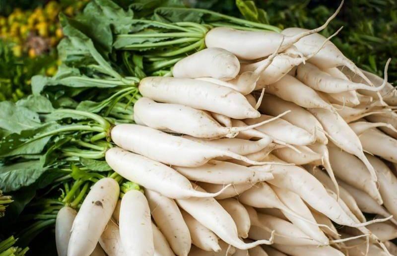 Всё, что нужно знать овощеводам разных регионов россии о сроках посадки редьки дайкон в открытом грунте и в теплице