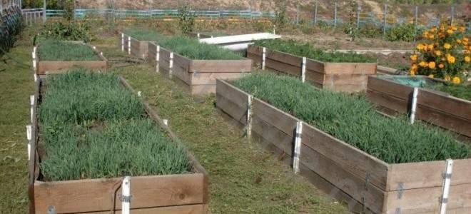"""Способы устройства """"теплых"""" грядок для выращивания огурцов"""