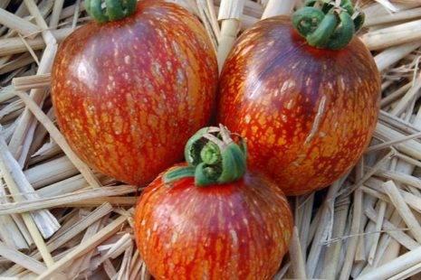 Томат лотарингская красавица — описание сорта, отзывы, урожайность