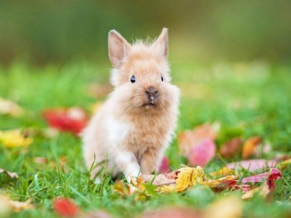 Вислоухие кролики: описание пород, питание, уход и содержание в домашних условиях