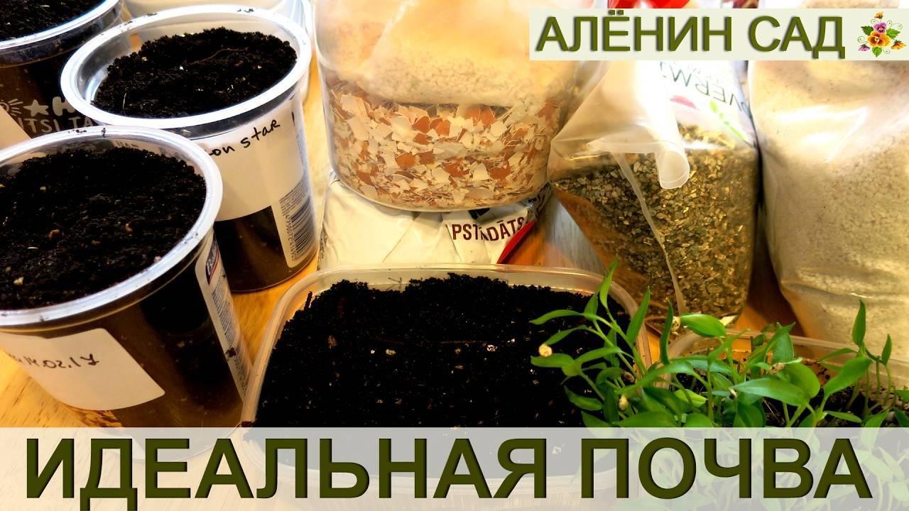 Подготовка почвы для томатов и подкормка рассады