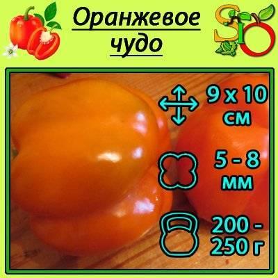 Сорт калифорнийское чудо: описание и правила выращивания болгарского перца