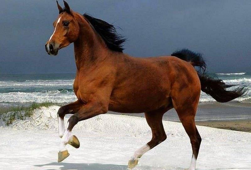 Названия существующих мастей лошадей, какие бывают и список расцветок