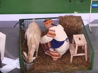 У коровы текут сопли