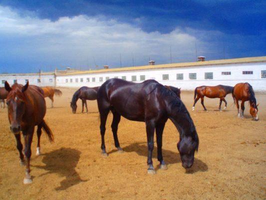 Как правильно разводить лошадей, предстоящие траты и возможная выгода