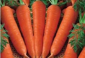 Характеристика черной моркови — особенности выращивания в открытом грунте