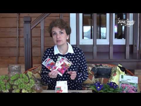 Когда выкапывать георгины и как хранить клубни зимой в домашних условиях