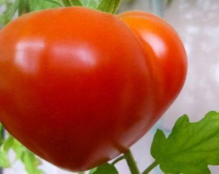 Вкусный великан на вашем огороде — томат «исполин малиновый»: описание сорта, его особенности и способы выращивания
