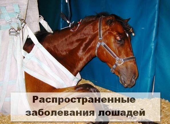 Как справиться с коликами у лошади?