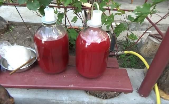Рецепты и нюансы приготовления вина из земляники