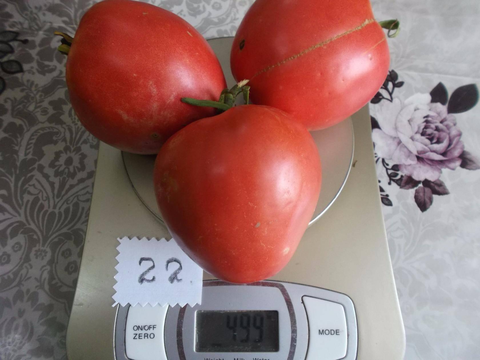 Лучшие сорта томатов для краснодарского края в открытый грунт