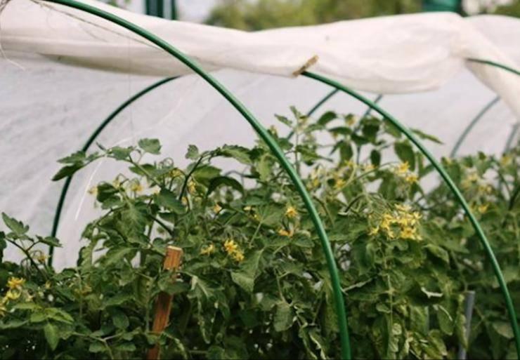 Удобрение для огурцов — весной и осенью, особенности подкормки