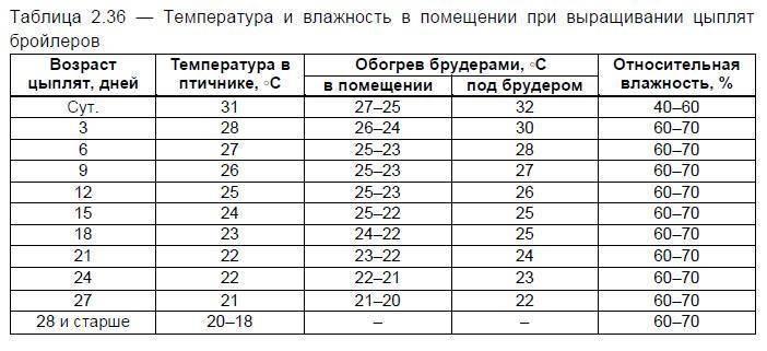 Температурный режим при выращивании бройлеров. таблица температур для бройлеров