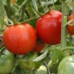 Чем подкормить помидоры, чтобы плоды были сладкими
