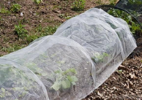 Укрывной материал для клубники от сорняков