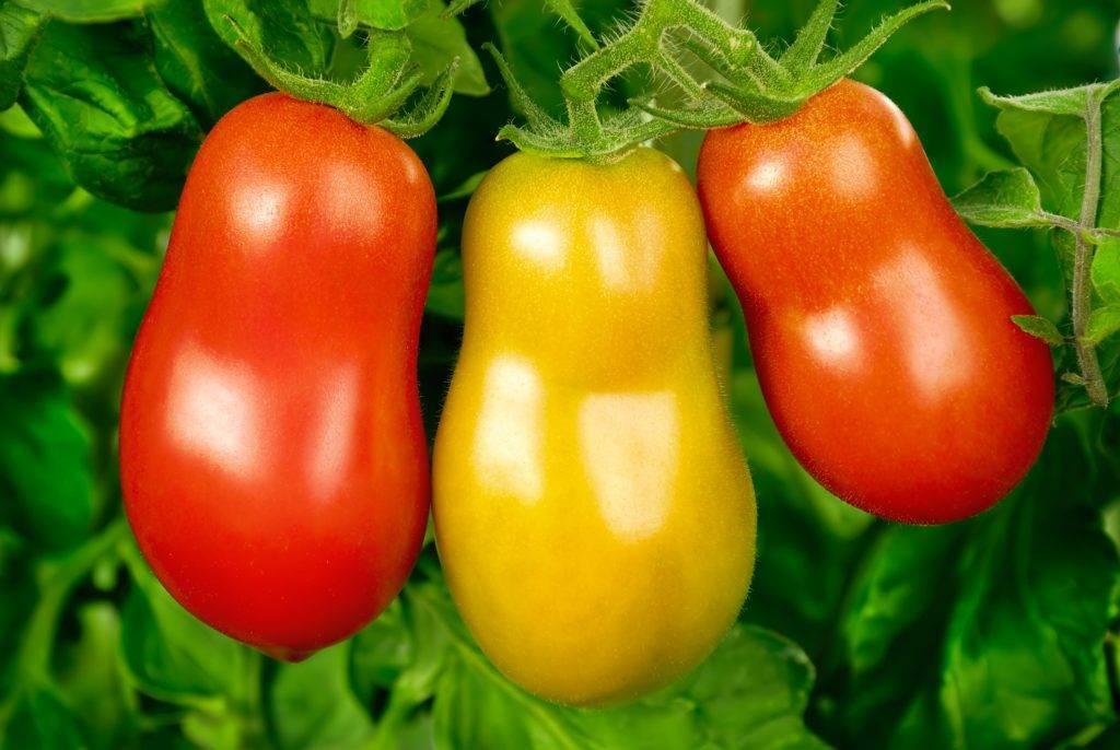 Лучшие сорта томатов, разработанные японскими селекционерами