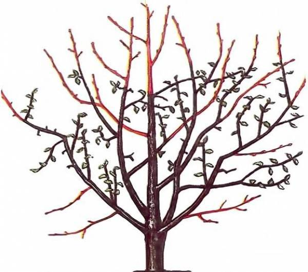 Обрезка яблони: когда, как и зачем