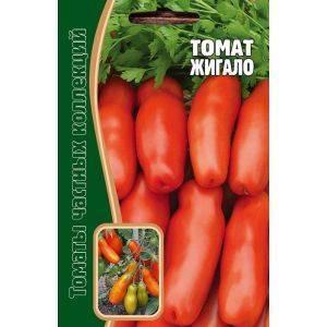 Сорт помидор жигало: характеристика и особенности выращивания