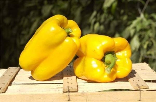 Перец венгерский желтый острый