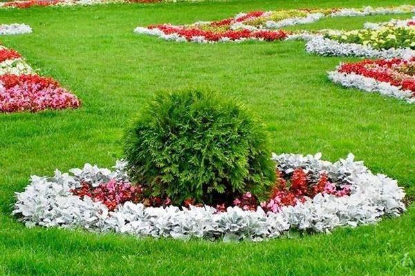 Использование растений в ландшафтном дизайне
