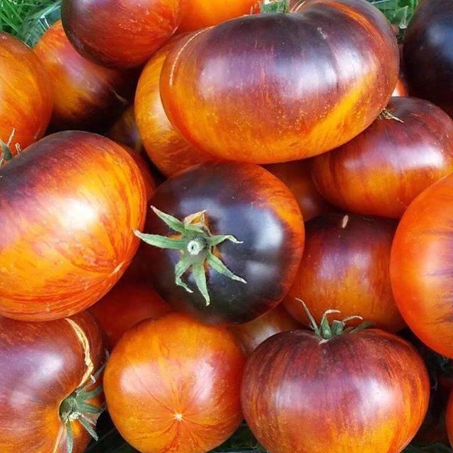 Томат санрайз f1: популярный сорт из голландии